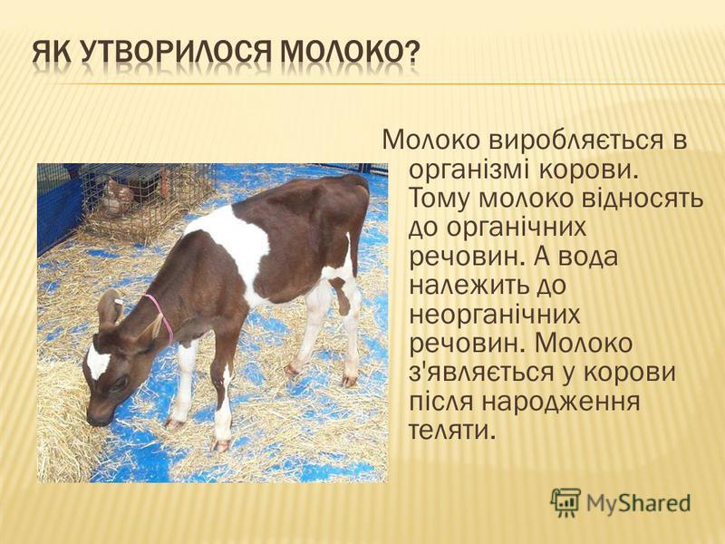 Молоко виробляється в організмі корови. Тому молоко відносять до органічних речовин. А вода належить до неорганічних речовин. Молоко з'являється у корови після народження теляти.