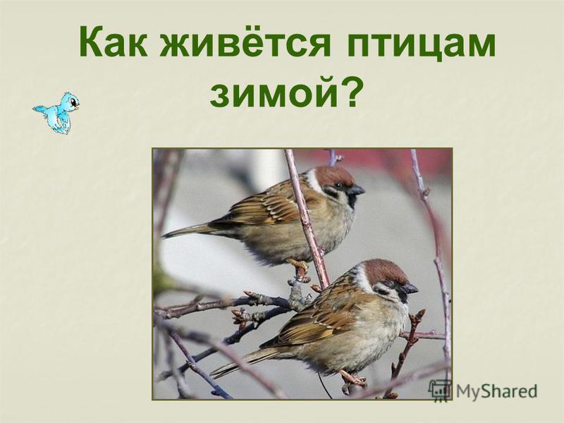 Как живётся птицам зимой?
