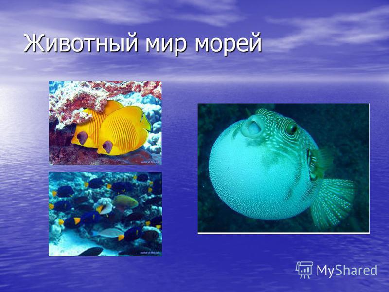 Животный мир морей