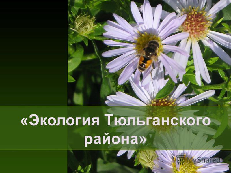 «Экология Тюльганского района»