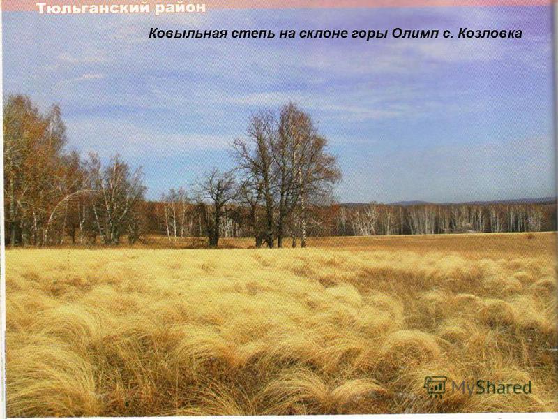 Ковыльная степь на склоне горы Олимп с. Козловка