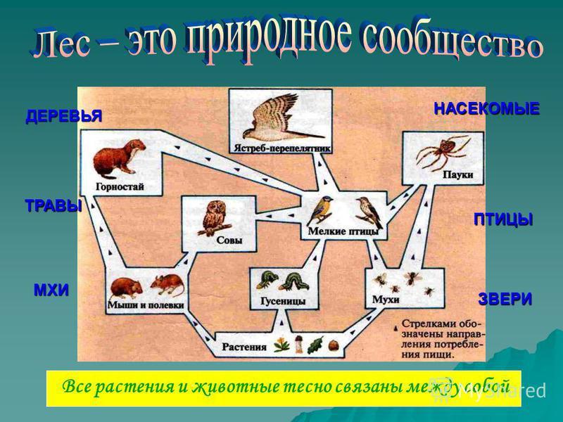 Все растения и животные тесно связаны между собой ДЕРЕВЬЯ ТРАВЫ МХИ ПТИЦЫ ЗВЕРИ НАСЕКОМЫЕ
