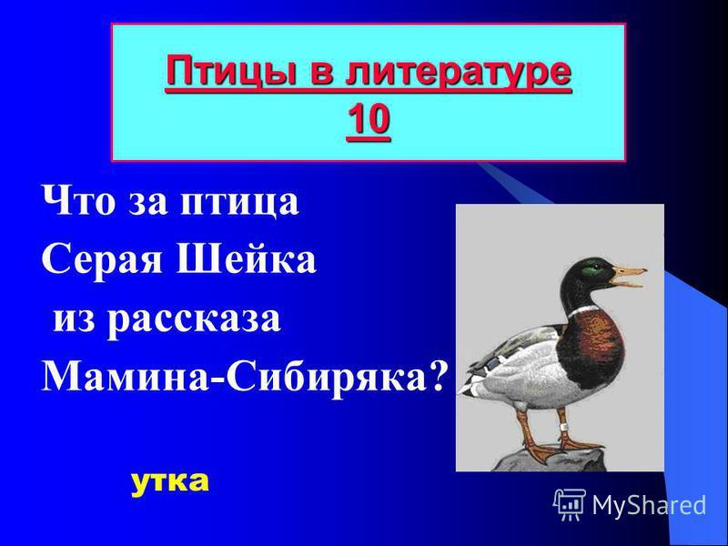 Что за птица Серая Шейка из рассказа Мамина-Сибиряка? Птицы в литературе 10 Птицы в литературе 10 утка