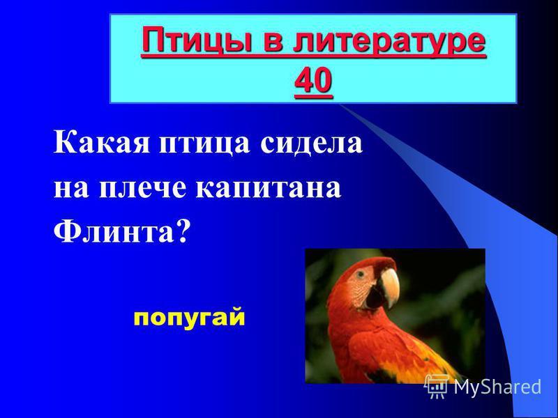 Какая птица сидела на плече капитана Флинта? Птицы в литературе 40 Птицы в литературе 40 попугай
