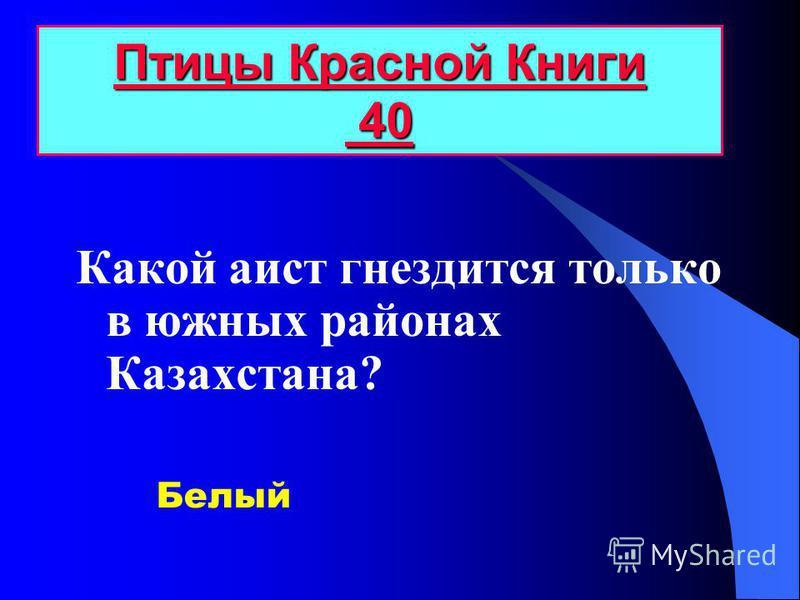Какой аист гнездится только в южных районах Казахстана? Птицы Красной Книги 40 Птицы Красной Книги 40 Белый