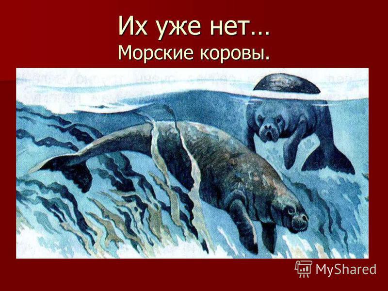 Их уже нет… Морские коровы.