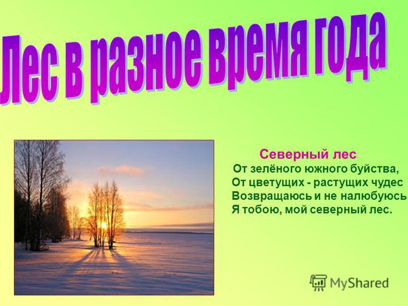 Северный лес От зелёного южного буйства, От цветущих - растущих чудес Возвращаюсь и не налюбуюсь Я тобою, мой северный лес.