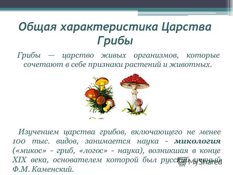 Общая характеристика Царства Грибы Грибы царство живых организмов, которые сочетают в себе признаки растений и животных. Изучением царства грибов, включающего не менее 100 тыс. видов, занимается наука - микология («микоз» - гриб, «логос» - наука), во