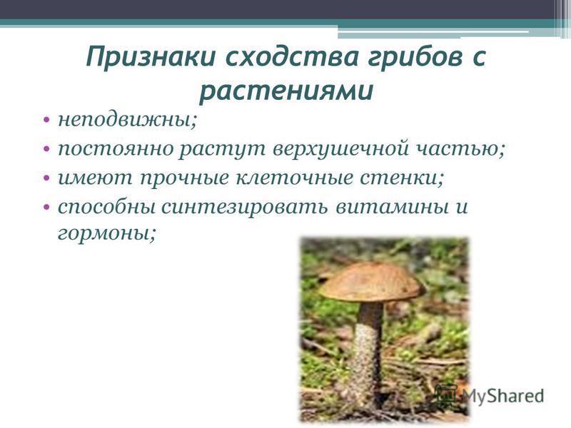 Признаки сходства грибов с растениями неподвижны; постоянно растут верхушечной частью; имеют прочные клеточные стенки; способны синтезировать витамины и гормоны;
