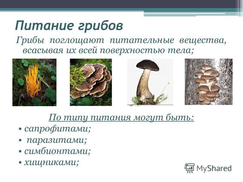Питание грибов Грибы поглощают питательные вещества, всасывая их всей поверхностью тела; По типу питания могут быть: сапрофитами; паразитами; симбионтами; хищниками;