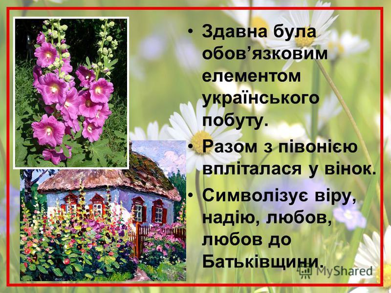 Здавна була обовязковим елементом українського побуту. Разом з півонією впліталася у вінок. Символізує віру, надію, любов, любов до Батьківщини.