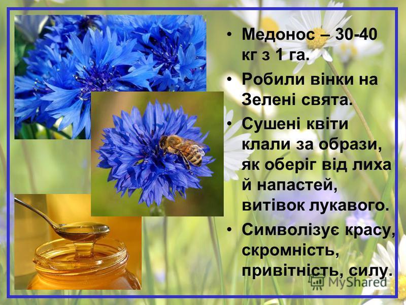 Медонос – 30-40 кг з 1 га. Робили вінки на Зелені свята. Сушені квіти клали за образи, як оберіг від лиха й напастей, витівок лукавого. Символізує красу, скромність, привітність, силу.