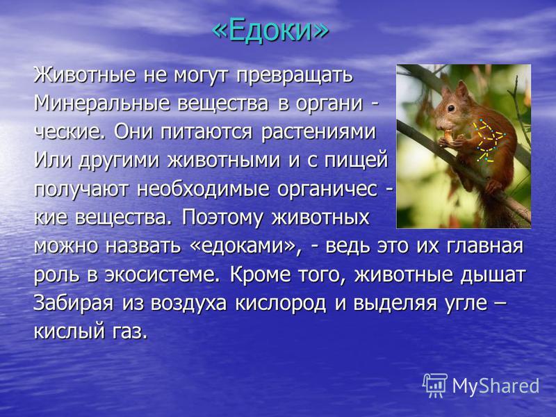 «Едоки» Животные не могут превращать Минеральные вещества в органические. Они питаются растениями Или другими животными и с пищей получают необходимые органические вещества. Поэтому животных можно назвать «едоками», - ведь это их главная роль в экоси