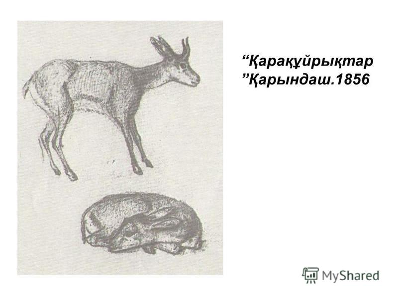 Қарақұйрықтар Қарындаш.1856