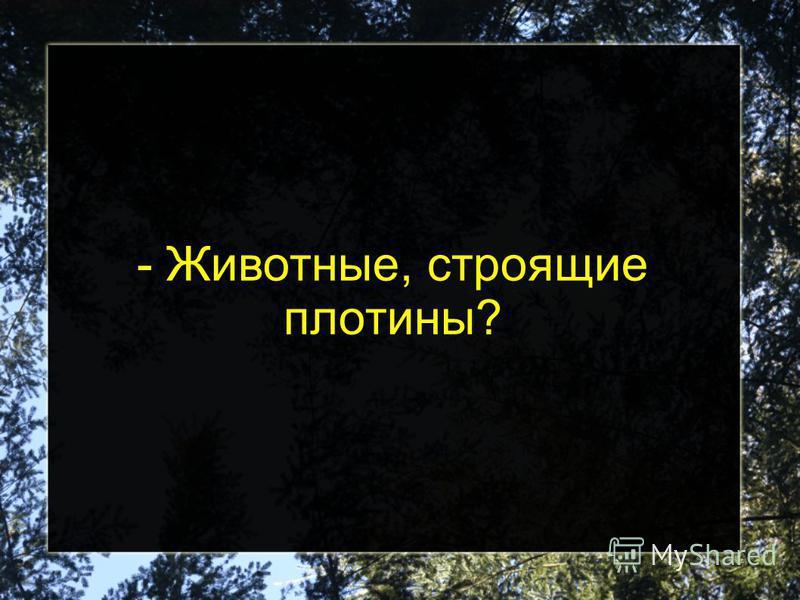 - Животные, строящие плотины?
