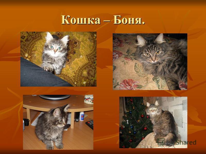 Кошка – Боня.