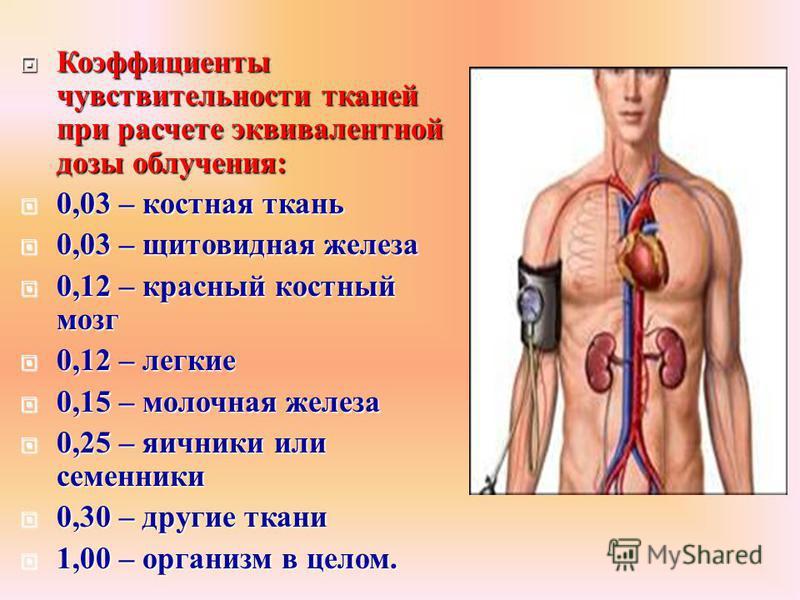Коэффициенты чувствительности тканей при расчете эквивалентной дозы облучения : Коэффициенты чувствительности тканей при расчете эквивалентной дозы облучения : 0,03 – костная ткань 0,03 – костная ткань 0,03 – щитовидная железа 0,03 – щитовидная желез