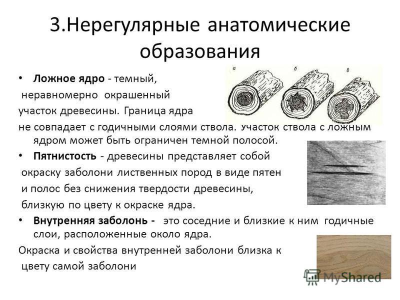 3. Нерегулярные анатомические образования Ложное ядро - темный, неравномерно окрашенный участок древесины. Граница ядра не совпадает с годичными слоями ствола. Участок ствола с ложным ядром может быть ограничен темной полосой. Пятнистость - древесины