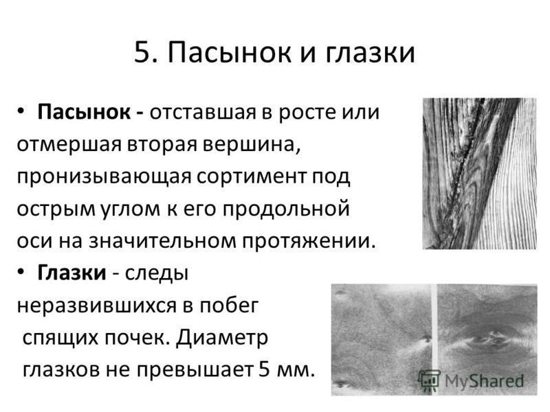 5. Пасынок и глазки Пасынок - отставшая в росте или отмершая вторая вершина, пронизывающая сортимент под острым углом к его продольной оси на значительном протяжении. Глазки - следы неразвившихся в побег спящих почек. Диаметр глазков не превышает 5 м