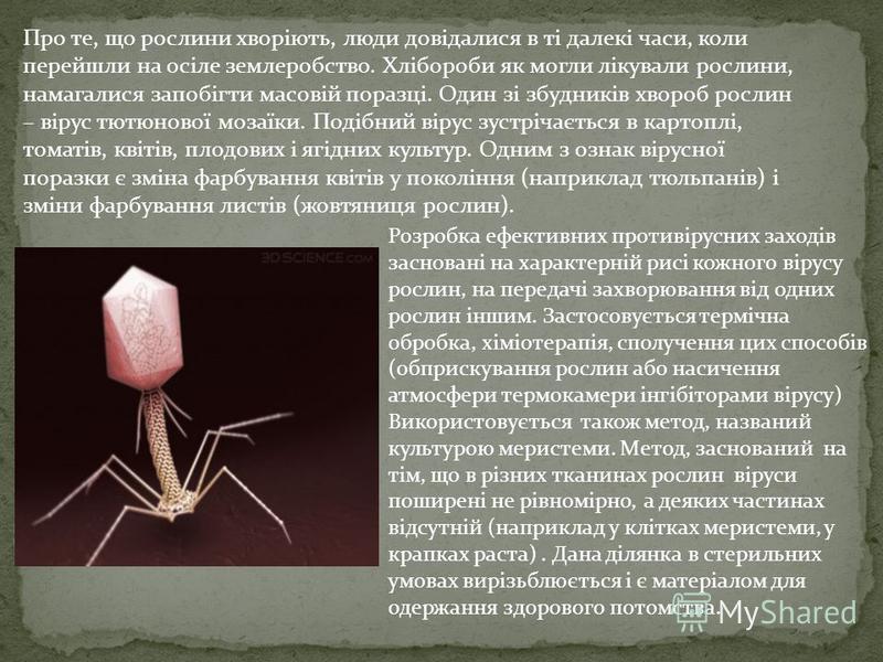 Про те, що рослини хворіють, люди довідалися в ті далекі часи, коли перейшли на осіле землеробство. Хлібороби як могли лікували рослини, намагалися запобігти масовій поразці. Один зі збудників хвороб рослин – вірус тютюнової мозаїки. Подібний вірус з