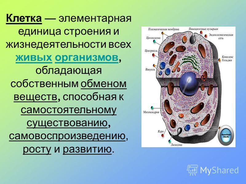 Клетка элементарная единица строения и жизнедеятельности всех живых организмов, обладающая собственным обменом веществ, способная к самостоятельному существованию, самовоспроизведению, росту и развитию. живых организмов