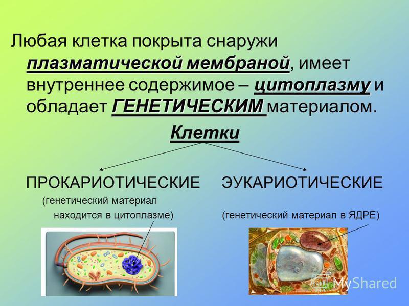 плазматической мембраной цитоплазму ГЕНЕТИЧЕСКИМ Любая клетка покрыта снаружи плазматической мембраной, имеет внутреннее содержимое – цитоплазму и обладает ГЕНЕТИЧЕСКИМ материалом. Клетки ПРОКАРИОТИЧЕСКИЕ ЭУКАРИОТИЧЕСКИЕ (генетический материал находи