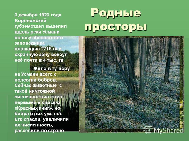 Родные просторы 3 декабря 1923 года Воронежский губземотдел выделил вдоль реки Усмани полосу абсолютного заповедника площадью 2715 га и охранную зону вокруг неё почти в 4 тыс. га Жило в ту пору на Усмани всего с полсотни бобров. Сейчас животные с так