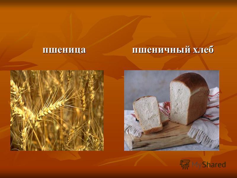 пшеница пшеничный хлеб