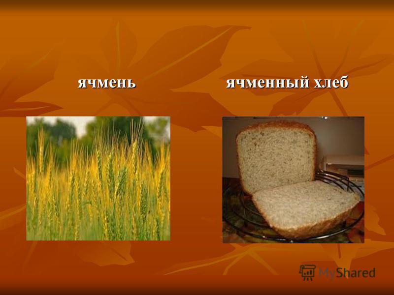 ячмень ячменный хлеб
