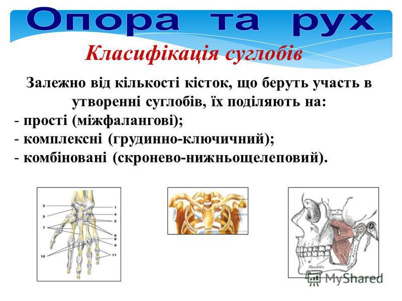 Класифікація суглобів Залежно від кількості кісток, що беруть участь в утворенні суглобів, їх поділяють на: - прості (міжфалангові); - комплексні (грудинно-ключичний); - комбіновані (скронево-нижньощелеповий).