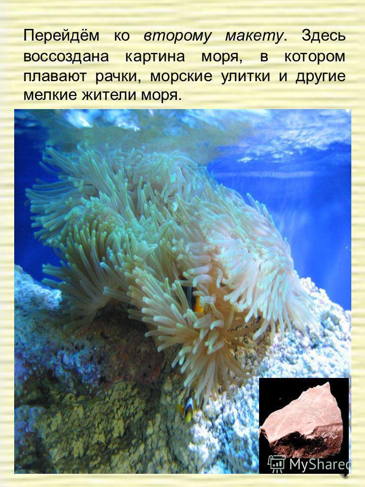 Перейдём ко второму макету. Здесь воссоздана картина моря, в котором плавают рачки, морские улитки и другие мелкие жители моря.