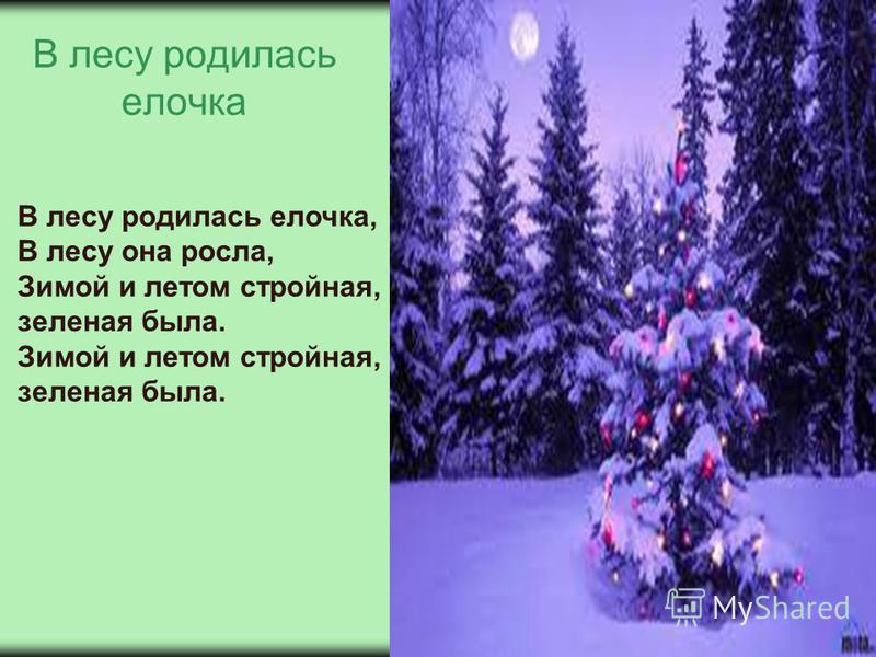 В лесу родилась елочка В лесу родилась елочка, В лесу она росла, Зимой и летом стройная, зеленая была. Зимой и летом стройная, зеленая была.