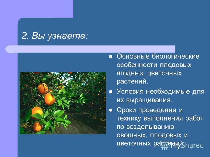 2. Вы узнаете: Основные биологические особенности плодовых ягодных, цветочных растений. Условия необходимые для их выращивания. Сроки проведения и технику выполнения работ по возделыванию овощных, плодовых и цветочных растений.