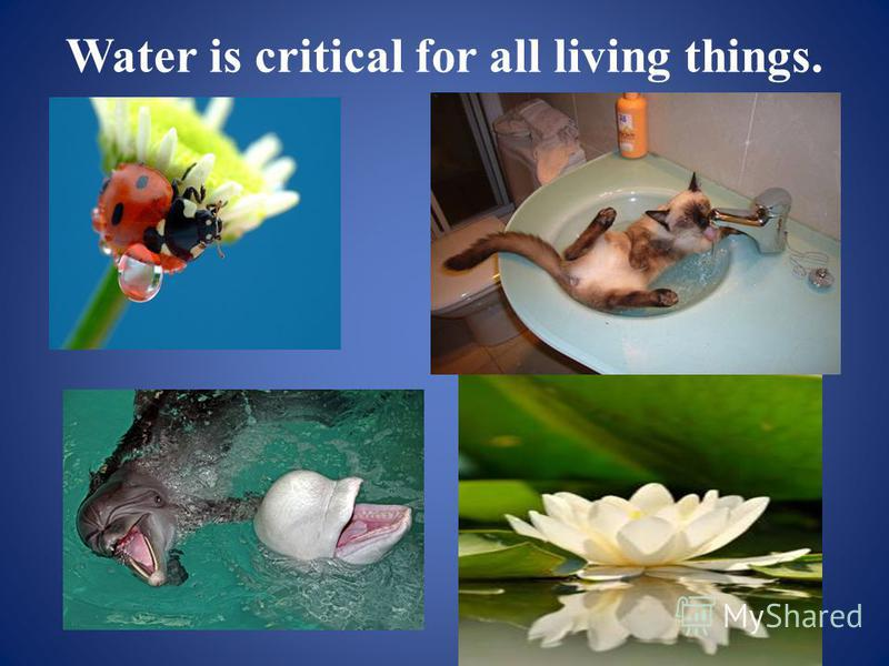 Water is critical for all living things.