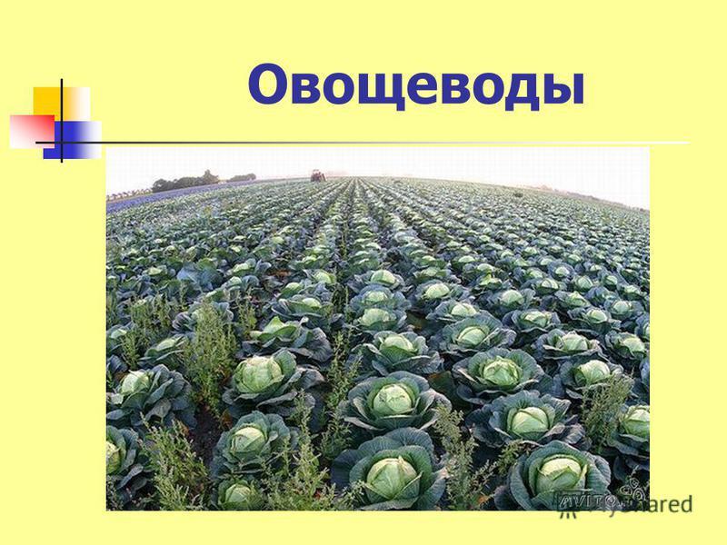 Овощеводы