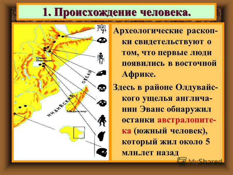 1. Происхождение человека. Археологические раскоп- ки свидетельствуют о том, что первые люди появились в восточной Африке. Здесь в районе Олдувайс- кого ущелья англичанин Эванс обнаружил останки австралопитека (южный человек), который жил около 5 млн