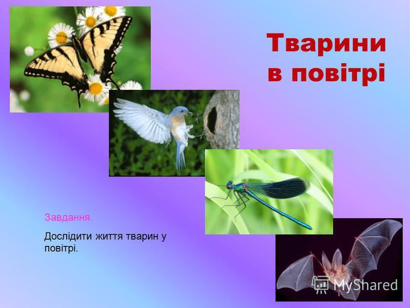 Тварини в повітрі Завдання. Дослідити життя тварин у повітрі.