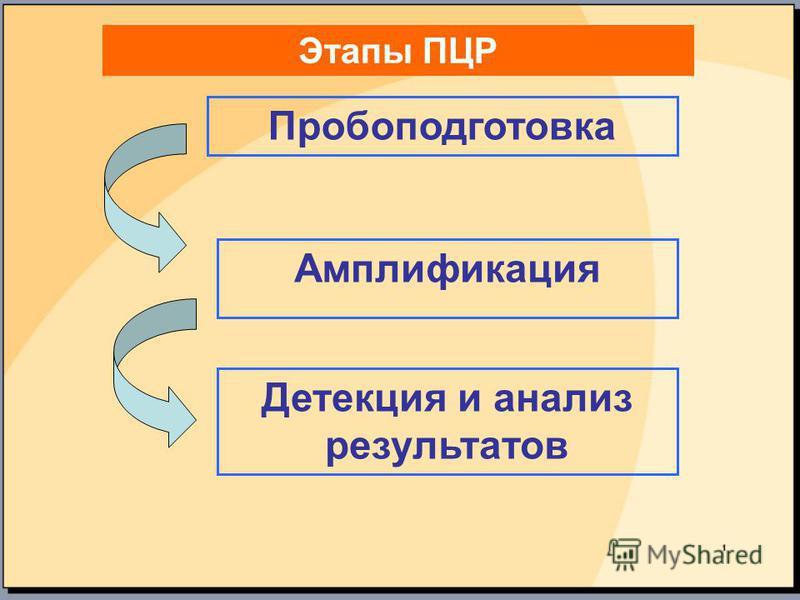 Этапы ПЦР Пробоподготовка Амплификация Детекция и анализ результатов