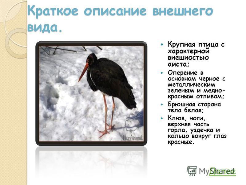 Краткое описание внешнего вида. Крупная птица с характерной внешностью аиста; Оперение в основном черное с металлическим зеленым и медно- красным отливом; Брюшная сторона тела белая; Клюв, ноги, верхняя часть горла, уздечка и кольцо вокруг глаз красн