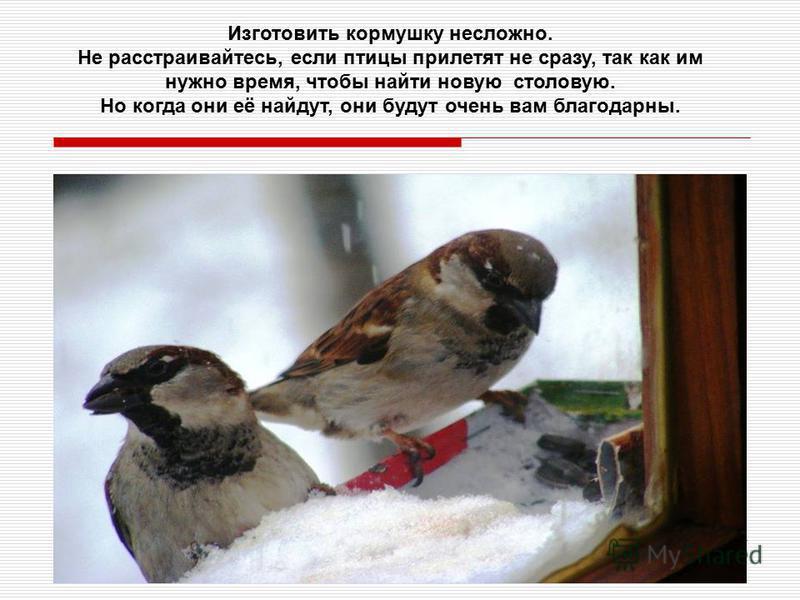 Изготовить кормушку несложно. Не расстраивайтесь, если птицы прилетят не сразу, так как им нужно время, чтобы найти новую столовую. Но когда они её найдут, они будут очень вам благодарны.