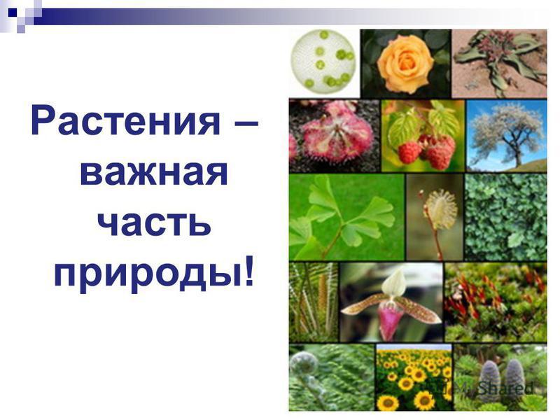 Растения – важная часть природы!