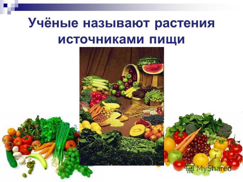 Учёные называют растения источниками пищи