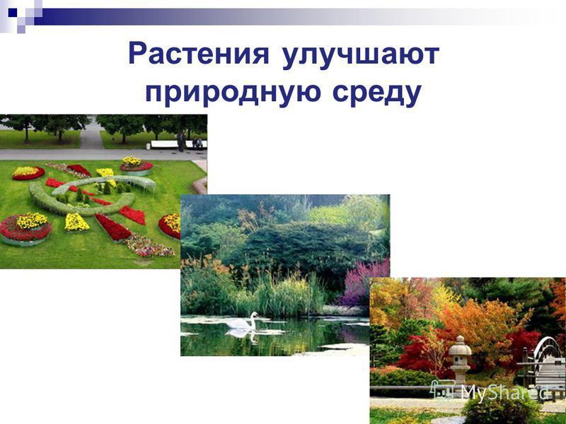 Растения улучшают природную среду