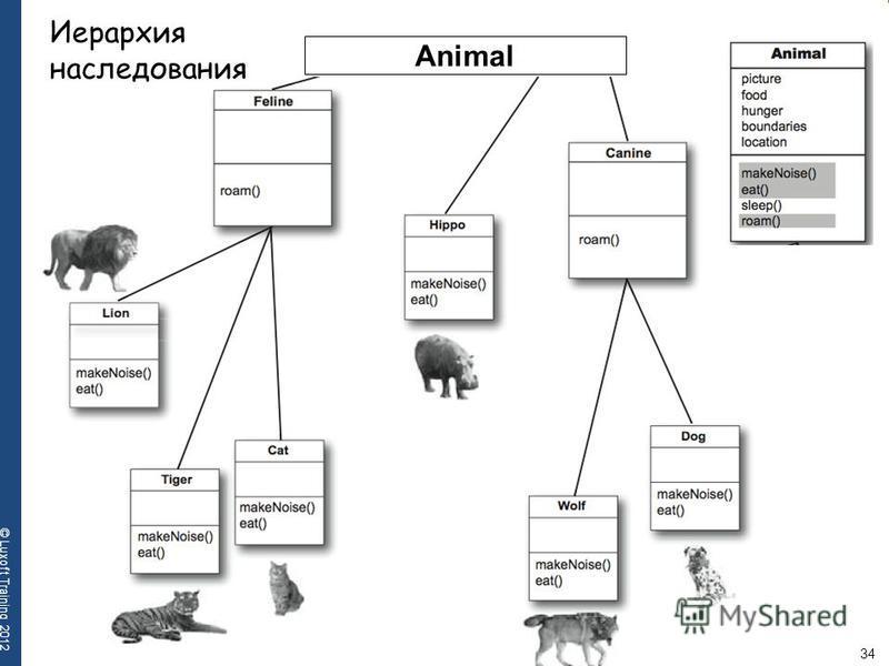 34 © Luxoft Training 2012 Animal Иерархия наследования