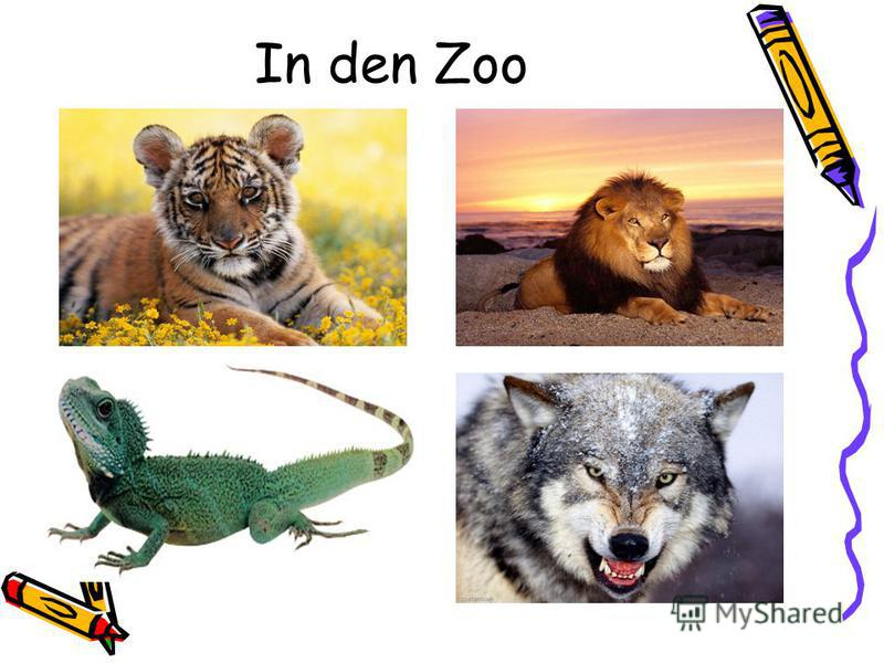 In den Zoo