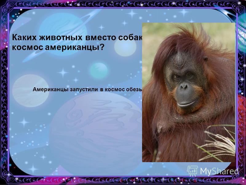 Каких животных вместо собак запускали в космос американцы? Американцы запустили в космос обезьяну по имени Бони