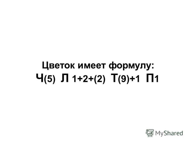 Цветок имеет формулу: Ч (5) Л 1+2+(2) Т (9)+1 П 1