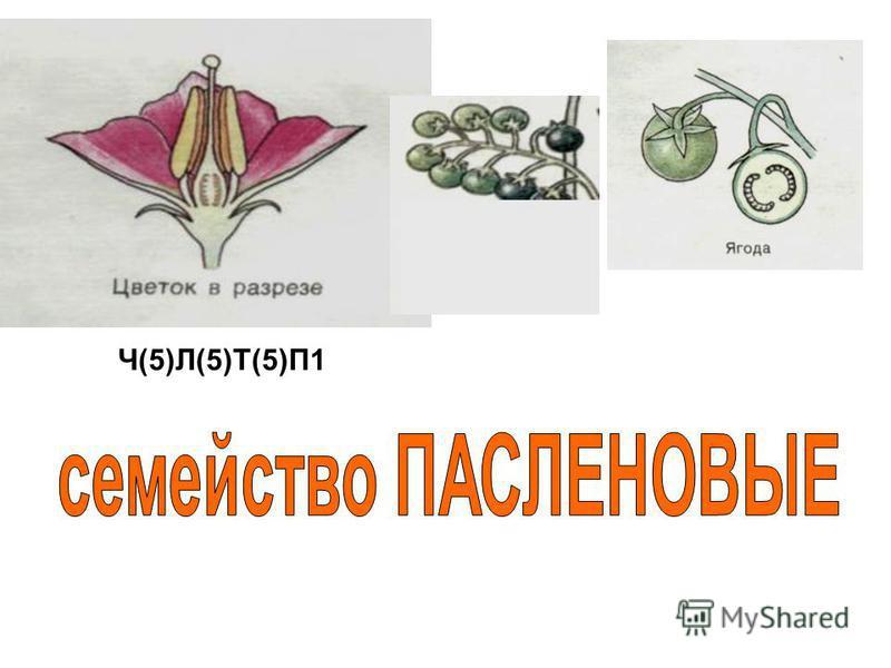 Ч(5)Л(5)Т(5)П1