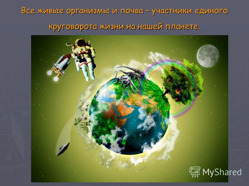 Все живые организмы и почва – участники единого круговорота жизни на нашей планете.