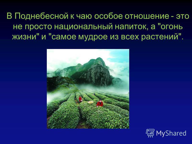 В Поднебесной к чаю особое отношение - это не просто национальный напиток, а огонь жизни и самое мудрое из всех растений.